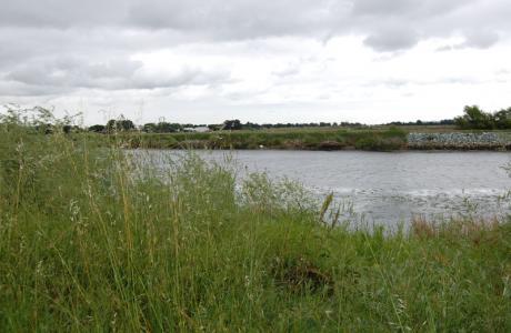 Brannan Island