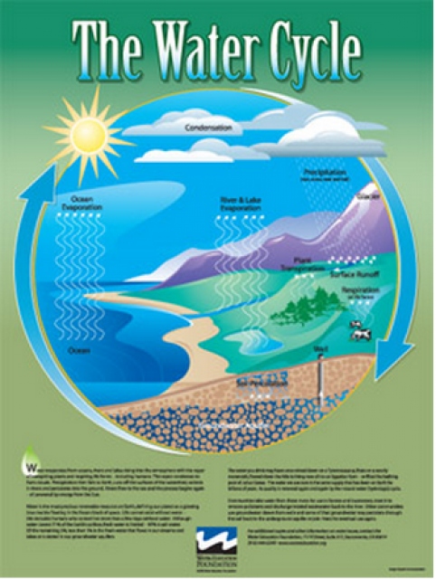 Water Cycle Poster Water Education Foundation