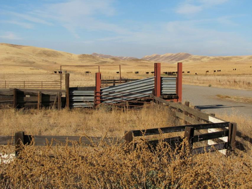 The proposed Sites Reservoir is in a rural cattle-grazing area west of the Sacramento Valley town of Maxwell.
