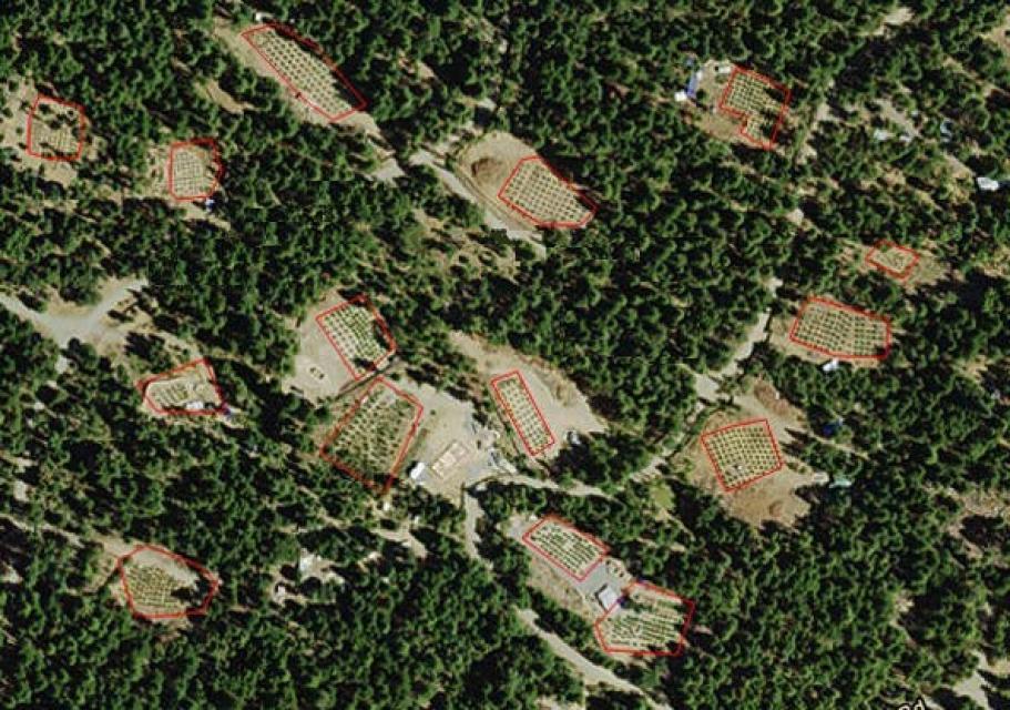 Marijuana Growing Areas California Map.Amid Green Rush Of Legal Cannabis California Strives To Control