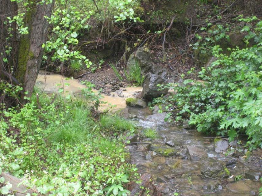 Sediment runoff from an illegal marijuana growing operation spills into a fish-bearing stream.