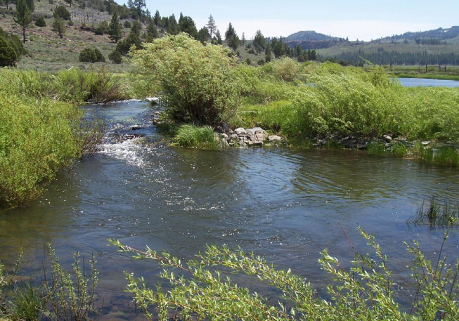 A tributary of the Feather River.