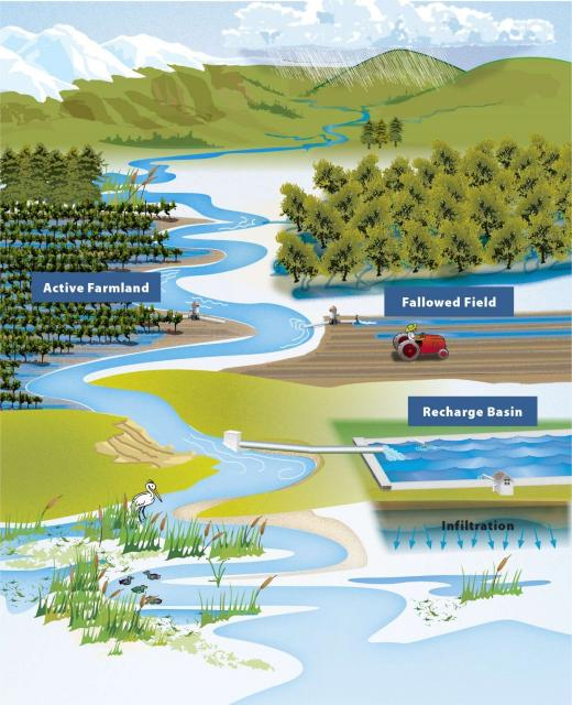 This schematic illustrates different ways managed aquifer recharge can be accomplished.