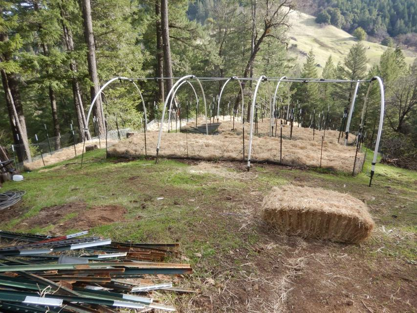 A cannabis garden with straw and other means to control winter erosion.