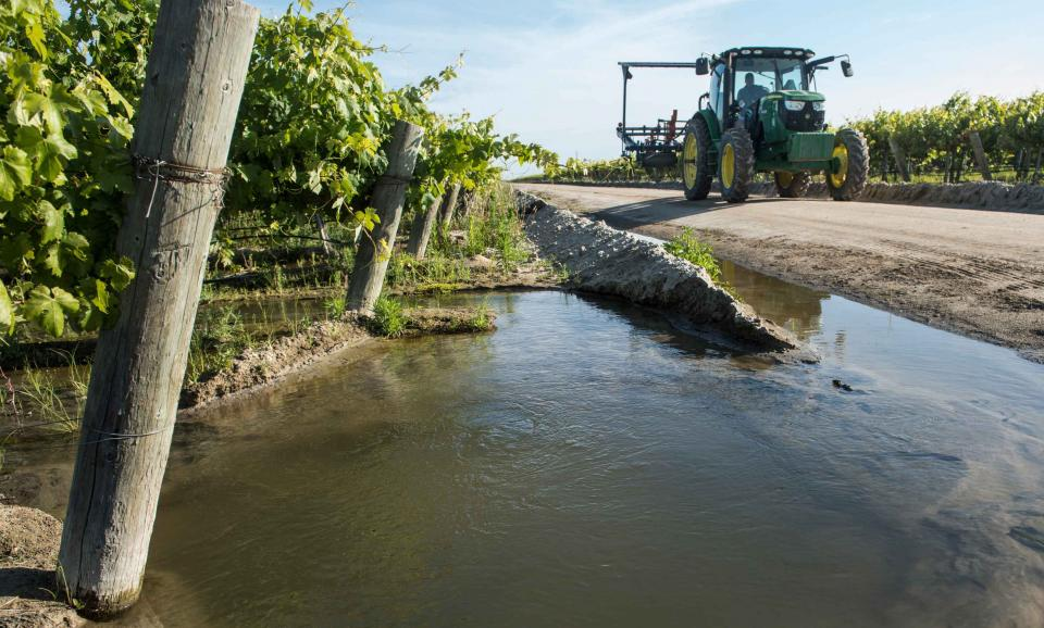 A vineyard in Fresno County is flooded to help put water back in the ground.