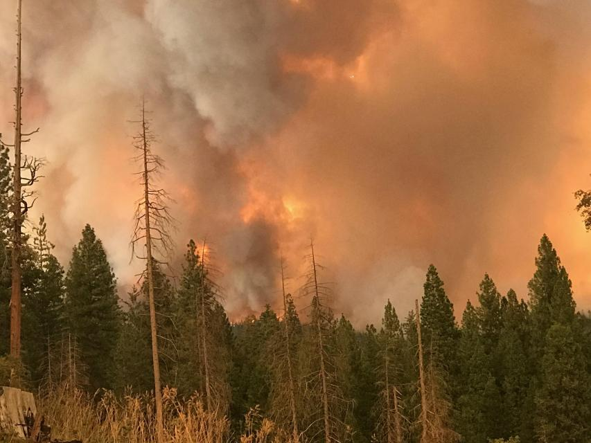 The 2018 Ferguson fire burned nearly 97,000 acres around Yosemite National Park, fueled in part by beetle-killed trees.
