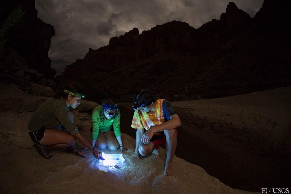 Citizen scientists on a Grand Canyon Youth river trip collect samples of adult aquatic insects using a light trap.