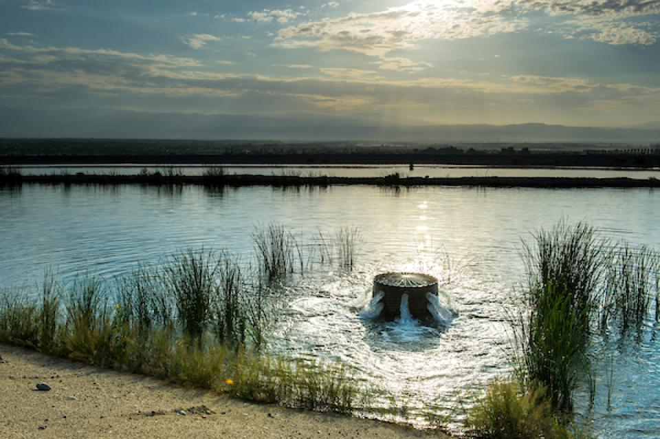 A water recharge basin in Southern California's Coachella Valley.