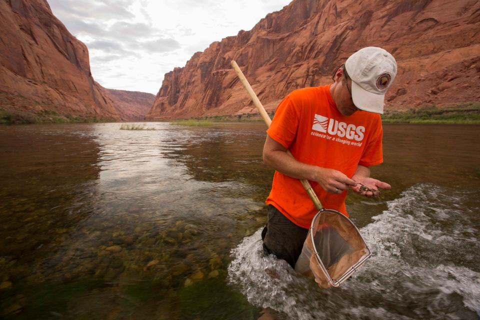 U.S. Geological Survey research ecologist Ted Kennedy collects aquatic invertebrates in the Colorado River below Glen Canyon Dam.