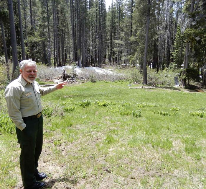 District Ranger Lon Henderson with Tahoe National Forest points toward an overgrown section of forest within the Blue Forest project area.